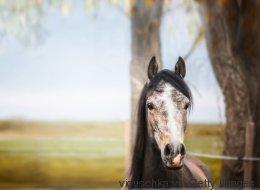 Borna-Virus tötet Pferde in Österreich: Die Spitzmaus gilt als Überträger - das ist ein Problem
