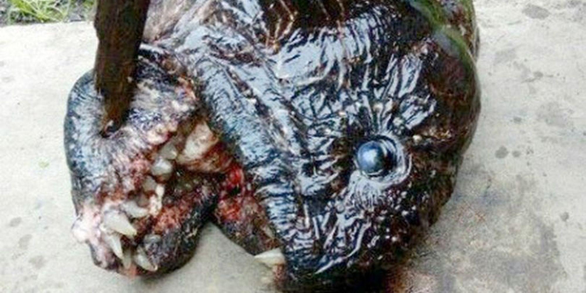 Ein Angler denkt, er fängt einen Fisch – stattdessen hat er einen Mutanten an der Angel
