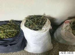 Ο ελληνοαλβανικός «πόλεμος του τσαγιού»: Αλβανοί περνούν τα σύνορα και κλέβουν βότανα στη μεθόριο