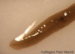 Forscher schickten einen Wurm ins All - als er zurückkam, war er mutiert