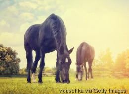 Vier tote Pferde in Österreich zeigen, dass ein tödlicher Virus eine neue Region heimsucht