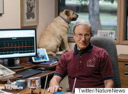 '네이처'에 실린 발명가 대신 강아지가 주목받다