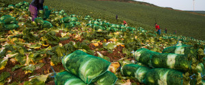 KOREAN FARM