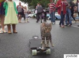 이 고양이는 끝내주는 스케이트보더다(동영상)