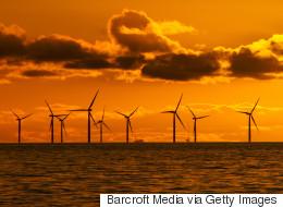 연안 풍력 발전소가 고래를 죽인다는 비난은 사실일까?