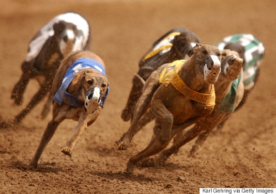 greyhound race us