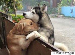 외로운 개가 집을 탈출해 친구를 찾아왔다(사진)
