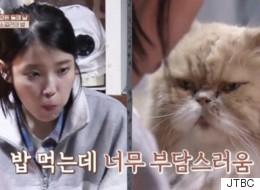 '효리네민박' 속 이 고양이의 숨겨진 과거(사진)