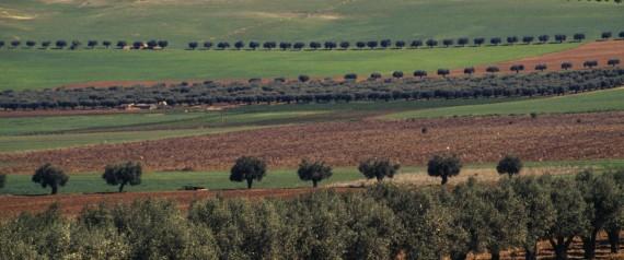 ALGERIA AGRICULTURE