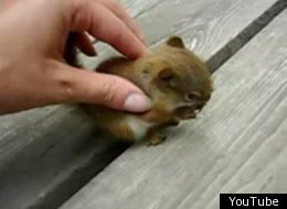 Adorable Baby Squirrel Video