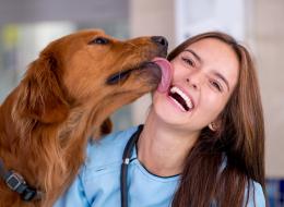 كلبك لا يحبك.. ويتودَّد إليك بسبب مرض جيني.. دراسة علمية