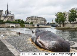 이 고래는 어쩌다 파리의 센 강가에서 죽어 있었을까?