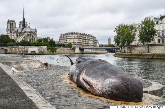 paris whale