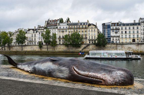 whale paris