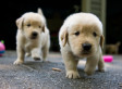 National Puppy Day: Puppies You Need More Than A Man