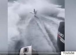 Οργή για τους ψαράδες που κακοποίησαν καρχαρία μέχρι θανάτου βάζοντάς τον να κάνει «σκι»