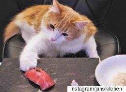 한 셰프가 고양이만을 위한 스시를 만들다(영상)