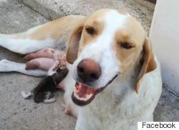 Σκυλίτσα φροντίζει αδέσποτο γατάκι στην Λαμία