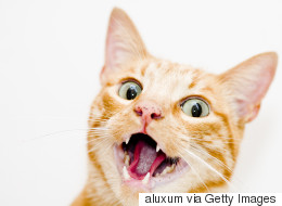 Γυναίκα έχασε τη ζωή της από δάγκωμα γάτας