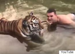 Βίντεο: Τίποτα δεν ηρεμεί πιο πολύ από ένα μπανάκι με...τίγρη