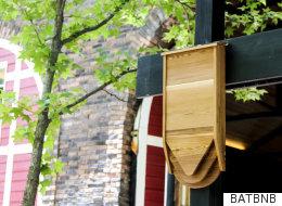 박쥐도 훌륭한 이웃이 될 수 있다는 걸 증명하는 '박쥐 비앤비'