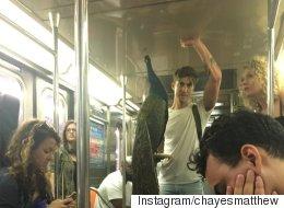 뉴욕 지하철에 공작새가 등장하다(사진)