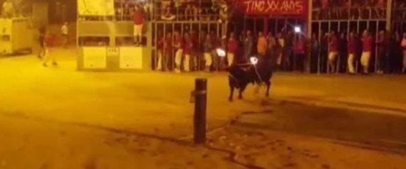 BULLS DEFENDERS SPAIN