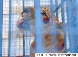 시리아 동물원에 남아있던 동물들이 구조됐다