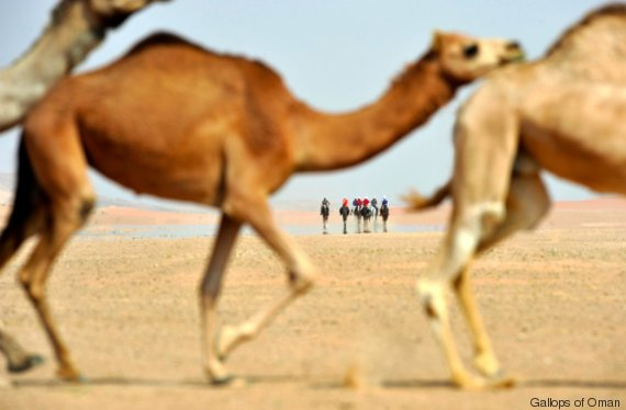 gallops of oman