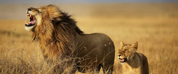 AUGUST LION
