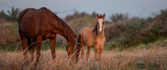 HORSES ANADOLU