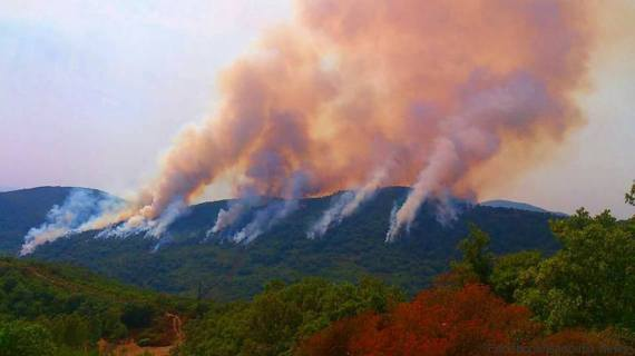 Jendouba: Le gouverneur nie l'arrestation des auteurs des incendies