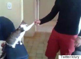 사람보다 멋지게 하이파이브를 선사하는 고양이(영상)