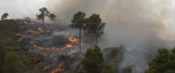FOREST BURN ALGERIA