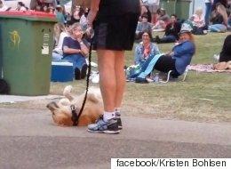 집에 가기 싫은 개는 죽은 척을 했다(동영상)