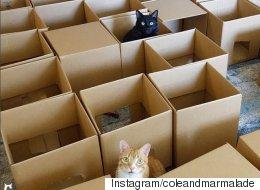 미로에 갇힌 이 고양이들은 탈출 따위 관심 없었다