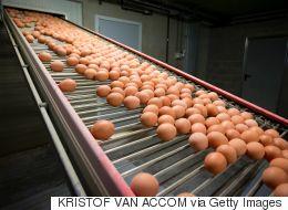 ΕΕ-Μολυσμένα αυγά: Σύσκεψη για τη διαχείριση της κρίσης θα συγκαλέσει η Κομισιόν