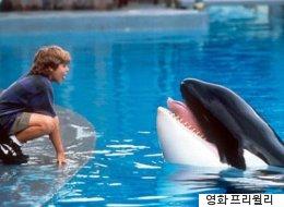영화 '프리윌리' 범고래가 살았던 수족관' 최신 근황