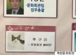 이 고양이가 충청도 공무원으로 일하게 된 사연(사진)