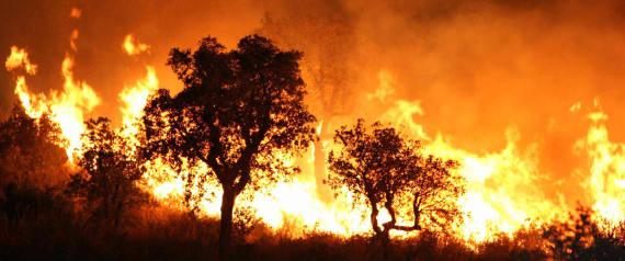 FOREST BURNING ALGERIA