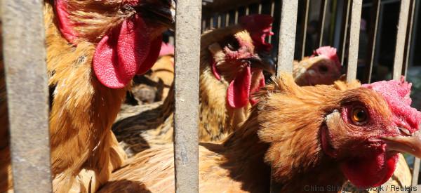 Der Skandal um mit Fipronil verseuchte Eier ist noch viel größer als gedacht