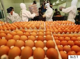 살충제 달걀 농장 대부분이 '친환경 농가'였다는 충격의 사실