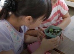 في كوكب اليابان: صحف تنبت الأزهار وتتحول إلى سماد للتربة