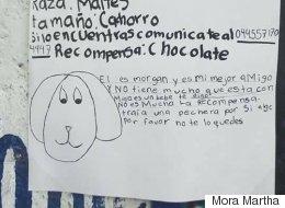 이렇게 그린 포스터로도 실종된 강아지를 찾았다