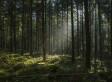 Forstwirtschaft als Wurmfortsatz der Landwirtschaft
