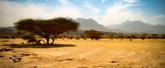 SAUDI ARABIA TREE