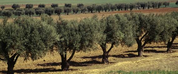 FARMING ALGERIA