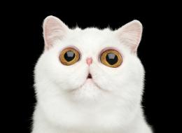 يتابعها الملايين على إنستغرام.. شاهد أول مؤتمر عالمي للقطط
