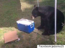 '무례한' 곰이 생일파티에 난입했다(동영상)