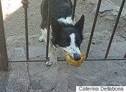 이 개는 모든 사람에게 장난감을 내민다(사진)